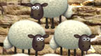 Three sheep stacked on top of each other.